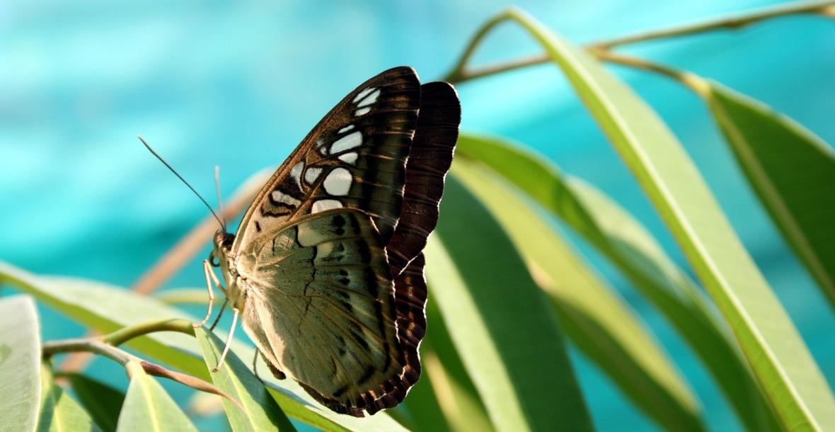 farfalla - premessa Piccole Cose
